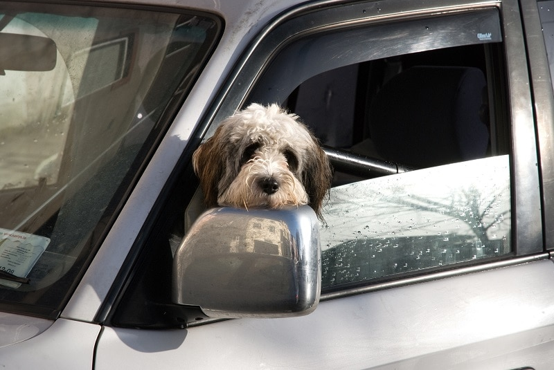 how to prepare for road trips with your dog