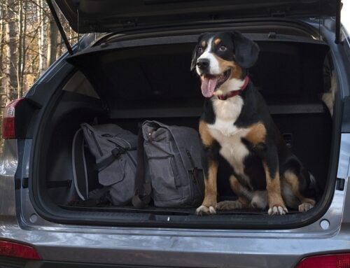 Tips for Fun Summer Road Trips With Dogs