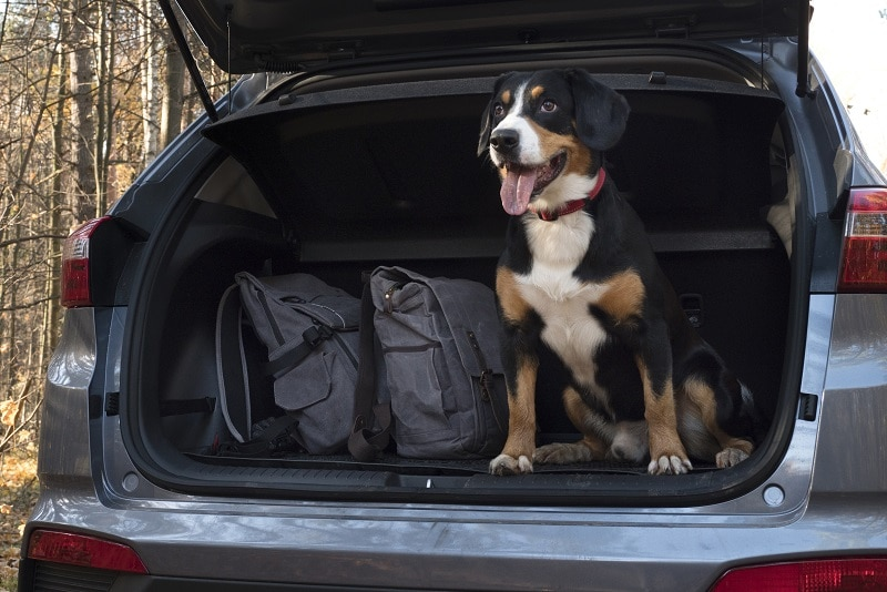 summer road trips with dogs tips and advice